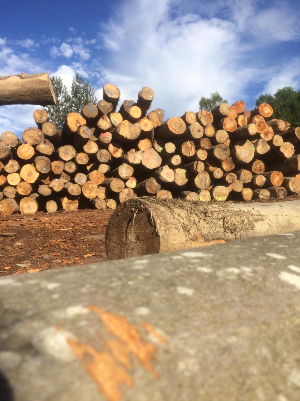 Grumes de l'exploitation forestière VOSGES